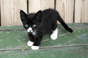 Black and White Kitten Names