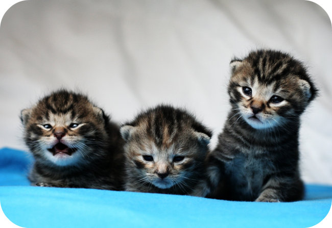 Male Cat Names Ideas Find Tabby Cats The Gallery