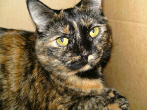Tortioiseshell cat names_marble colored