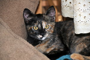 Tortoiseshell Cat Names_Cat Names City_Cute Cat Names