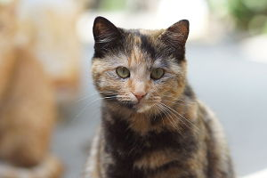 Tortoiseshell Cat Names_Cat Names City_Light Brown