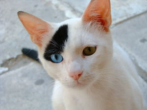 Unique Cat Names_Blue and Yellow Eyes