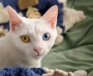 female white cat names Archives | Cat Names City