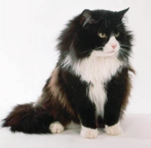 cat names for black and white cats