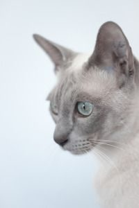 Exotic Cat Names - Names for a Cat in Different Languages