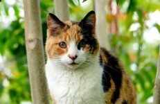 calico cat names