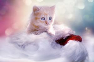 christmas cat names female