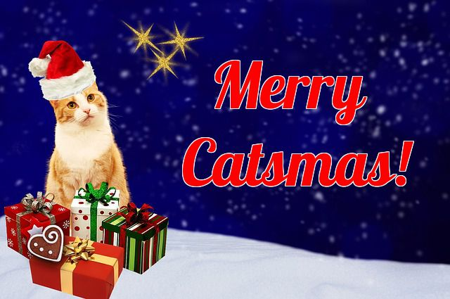 christmas themed cat names